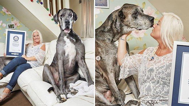 Le plus grand chien du monde nous a quittés — Disparition