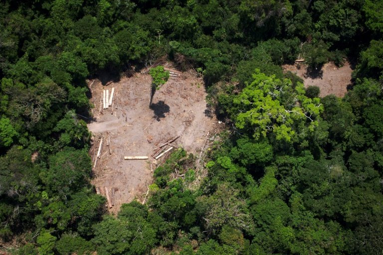 Amazon Deforestation in July Increased 278% over Same Period in 2018