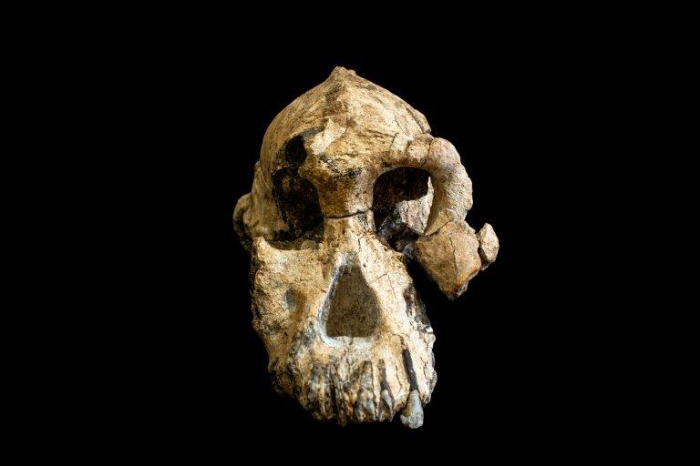 Les ancêtres de Lucy ont désormais une tête