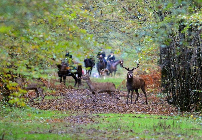 Dogs kill pregnant woman in France during hunt