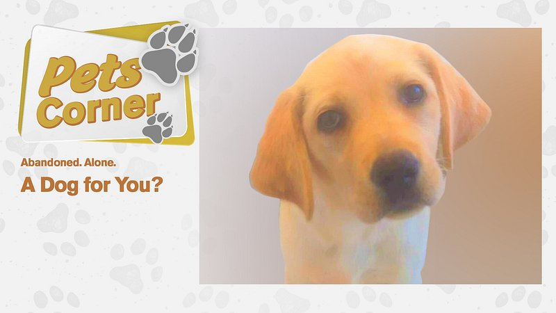 """RTL Today - A Dog for You?: Labrador puppy """"Happy"""" and her"""