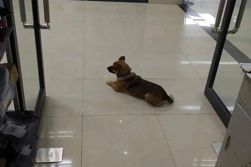Unaware of owner's death, dog waits at Wuhan hospital for three months